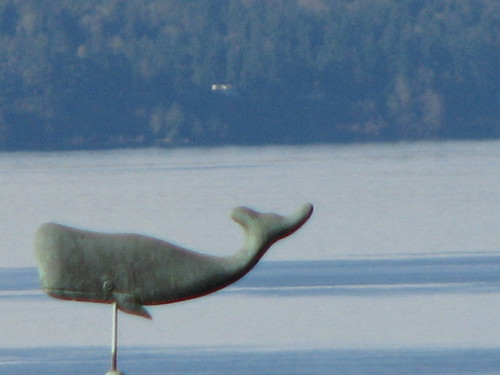 Whale IMG_6752