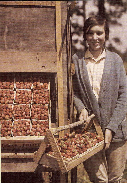 strawberry harvest, Hammond district of Louisiana, 1930