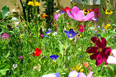 flowers for life (smokykater - 550k+ views) Tags: flowers life enjoy love color plant greece corfu korfu garden