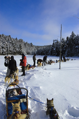 Winterdance Canada Dog Sledding Huskies by EveryDamnNameIsInUse, on Flickr