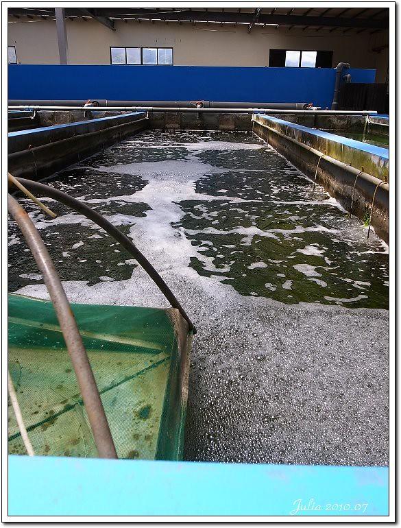 金車鮮蝦 (15)