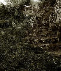Dolci gradini di tenebra (GiovanniTamponi - 2o Album - www.giovannitamponi.i) Tags: scale maria ombra selva castello giovanni foresta oscuro tenebre scalini tenebroso tamponi acquafredda malvagio