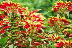 Plants (thoth1618) Tags: nyc newyorkcity plants ny newyork brooklyn garden bbg brooklynbotanicgarden botanicgarden brooklynny brooklynusa