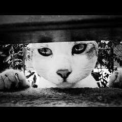 lonesome (Masahiro Makino) Tags: bw monochrome japan cat photoshop kyoto sad adobe  stray  lonely ricoh isolated lightroom lonesome kiyamachi r10  20090902154209ricohr10ls640p