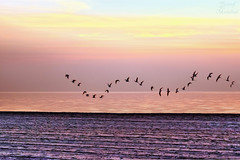 Squadron seabirds (Yousef Malallah) Tags: sea beautiful wonderful amazing sony kuwait  hdr   seabirds squadron      yousef         a700                 mywinners   anawesomeshot  malallah