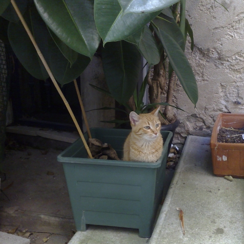 Cat in a plant pot