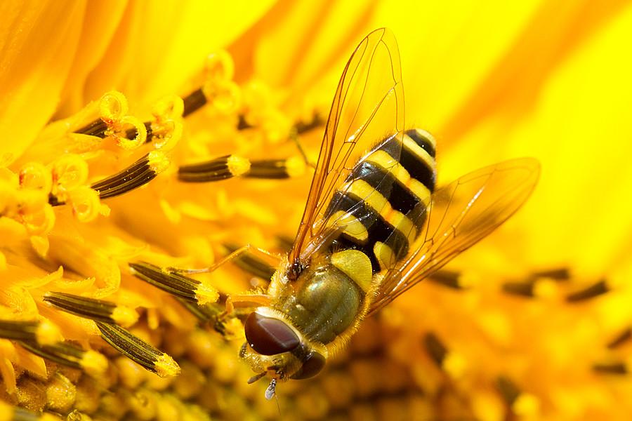 IMAGE: http://farm5.static.flickr.com/4127/4962732813_591557debb_b.jpg