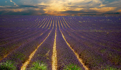 A Lavender Sunset [A Sunset I Can´t forget]