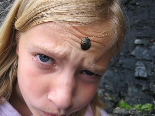 limpet 3rd eye