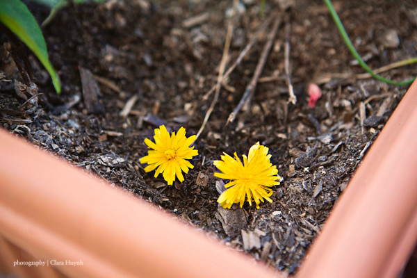 Photo A Day September - Day 7 - Planting Weeds...