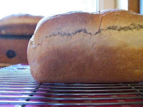 homemade spelt bread