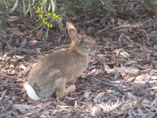 Bunny at University of Canberra