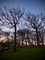 Way to Work - Auckland Domain (Skunkzie) Tags: park new morning trees 3 silhouette delete10 museum delete9 garden delete5 delete2 delete6 delete7 branches parks delete8 delete3 delete delete4 save auckland zealand delete11 domain