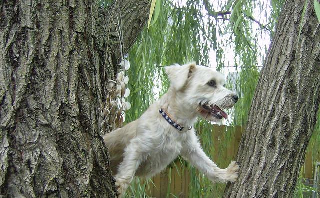 Ralphie up a tree