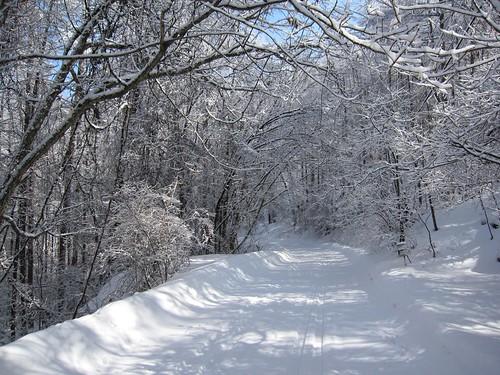 散歩道の樹氷 2010年2月14日10:57 by Poran111
