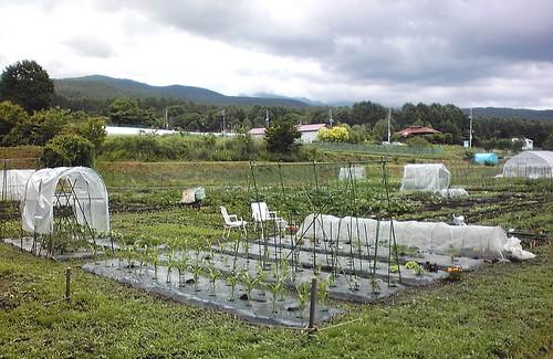 植付けの終わった畑 2010年6月28日午後 by Poran111