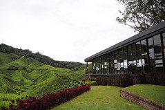 BOH tea centre (a.new.set.of.eyes) Tags: green nikon hills teaplantations bohteacentre d5000