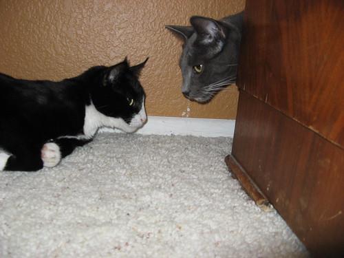 Coraline & Oliver