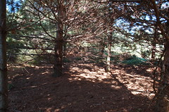 """Magical Pine Grove <a style=""""margin-left:10px; font-size:0.8em;"""" href=""""http://www.flickr.com/photos/91915217@N00/4997188003/"""" target=""""_blank"""">@flickr</a>"""
