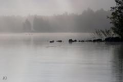 Sumu- The Fog (Chrisseee) Tags: lake fog canon finland landscape sysmä kristiinahillerström chrisseee joutsjärvi