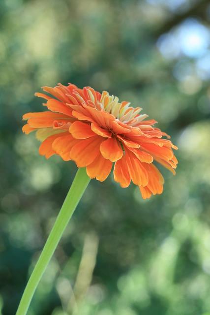 garden 883