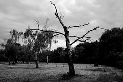 Zentralfriedhof (montnoirat) Tags: vienna wien leica blackandwhite film monochrome 35mm austria blackwhite österreich nikon delta super xp2 f 400 m8 plus sw hp5 p 100 pan kodachrome mm d200 monochrom agfa 35 schwarzweiss weiss ilford fp4 m6 apx schwarz afs x1 f3545g leicacamera georg m9 m7 ウィーン x2 ifed 2485mm zoomnikkor i schwarzenberger leicam9 pureblackandwhite georgschwarzenberger leicakamera ゲオルクシュワルツェンバーガー leicam9monochrom leicam9monochrome