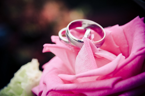Wedding Rings on pink rose