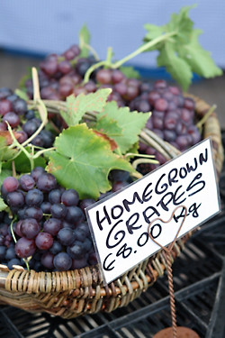 homegrown grapes