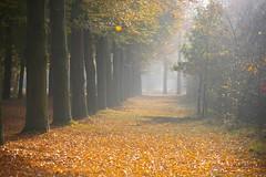 Autumn mood (Johan_Leiden) Tags: autumn trees fall netherlands leaves october nederland thenetherlands baarn