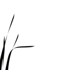 A song of Zen (.I Travel East.) Tags: life light blackandwhite bw reed monochrome reeds square nikon louisiana song minimal lakeshoredrive east lsu batonrouge zen lakeshore minimalism lucio 7022mm batonrougelouisiana lsulakes itravel nikon70200mmf28vr d700 nikond700 itraveleast asongofzen