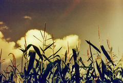 corn'n'clouds (unit299_09) Tags: old morning red summer color colour film nature garden outside spring lomography corn russia outdoor availablelight places vintagecamera fields zenit bayreuth sunnyday ussr latesummer zenite analogslr analoge mir12837mm redscalexr50200