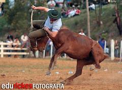 TOMBO 5 (Edu Rickes) Tags: horses caballos rodeo cavalos rs gauchos riograndedosul gaucho rodeio farrapos semanafarroupilha gineteada ginete fotógrafosbrasileiros edurickes fotógrafosgauchos culturagaucha corcovear fotógrafospelotas brazilianphotografers semanafarroupilhadepiratini fotografosportoalegre brazilrodeo