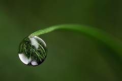 Dewdrop refraction (Lord V) Tags: macro water dewdrop refraction