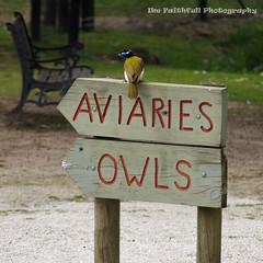 signs of a bird (Axemaniac-Art) Tags: bird sign pentax bigmomma alburywodonga axemaniac herowinner loislaneanywordssignsetc