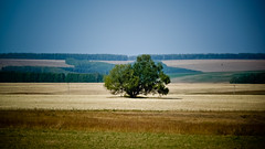 Just one tree (MipHka) Tags: autumn tree forest earth foliage distance    fieldgreens