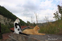 Waiting for the fall (Xena*best friend*) Tags: wood wild italy pet cats pets animals stone clouds fur chats furry woods feline tiger kitty kittens whiskers piemonte gato paws rg gatto hc katzen feral horatiocaine wildanimals richardgere allrightsreserved alleycatallies piedmontitaly canoneos500d