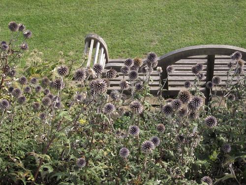 Echinops + Bench