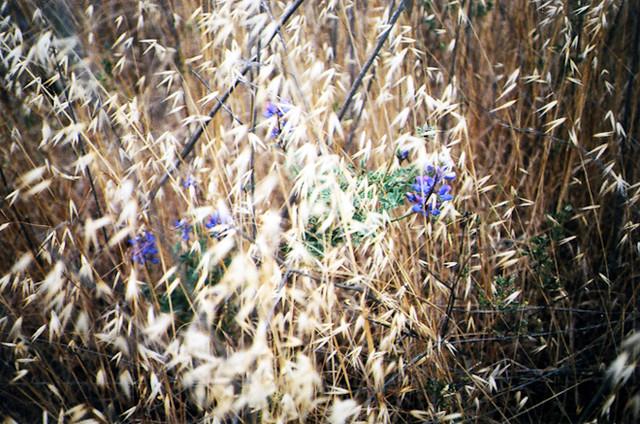 20090521_20090521_weeds