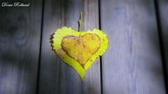 Coeur (Domi Rolland ) Tags: france europe adorable coeur amour beauté couleur tendresse aveyron midipyrénées