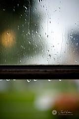 138/365 - and the rain falls.. (Joel Lim | joellim.com) Tags: autumn fall rain nikon bokeh trail 365 raindrop rains 138 50mmf14d project365 d700 joellim shutterdpictures