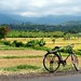 Bicycle and Rice Fields