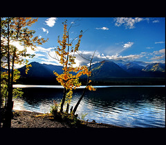- (klaus53) Tags: autumn lake canada mountains tree colors leaves landscape nikon britishcolumbia mywinners vanagram