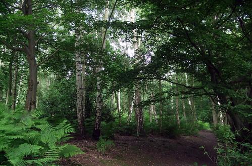 bencroftwood