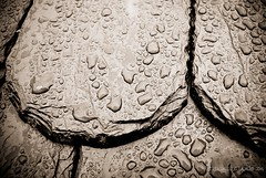 r a i n (zitronenkojote) Tags: roof water rain drops dach regen wassertropfen schiefer schindel