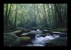 SlickRock Creek (Tony Barber --The Jolly Swagman) Tags: longexposure trees sunlight green film water rock creek canon dark moss cool fishing rocks near tennessee border northcarolina slide f1 southern shade transparency license area flyfishing wilderness trout slickrock shady banks appalachians agreement flyfish brysoncity browntrout joycekilmer reciprocal napg tonybarber natureoutpost ithinkthatishallneversee