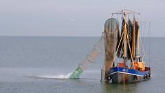 HK17 op Markermeer (raymondklaassen) Tags: nederland harderwijk flevoland vissersboot visserij visnetten markermeer oostvaardersdijk raymondklaassen hk17