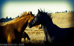 Horse Rivalries