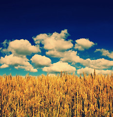 The Neverending Fields (Jurjen Harmsma Photography) Tags: