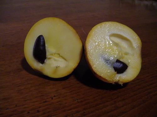 Asimina Triloba / Paw Paw