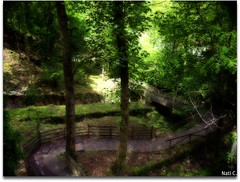 Camino por un bosque de Covadonga (Nati C.) Tags: naturaleza verde camino asturias paisaje bosque covadonga cruzadas parquenacionalpicosdeeuropa efectoorton